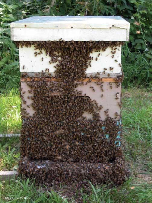 honey-bee-hive_0